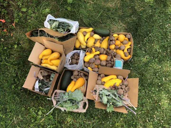 produce grown