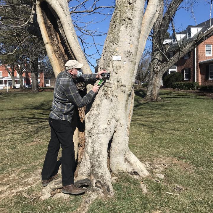 Forest Board volunteer installs tree tag