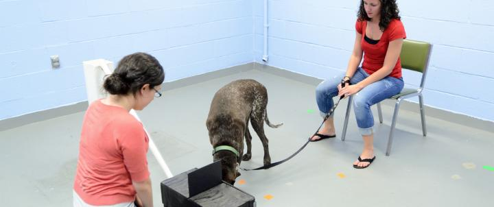 psychology students with dog