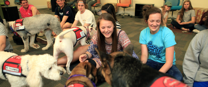 Students with stress buster therapy dogs