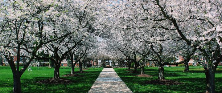 Pergola in spring